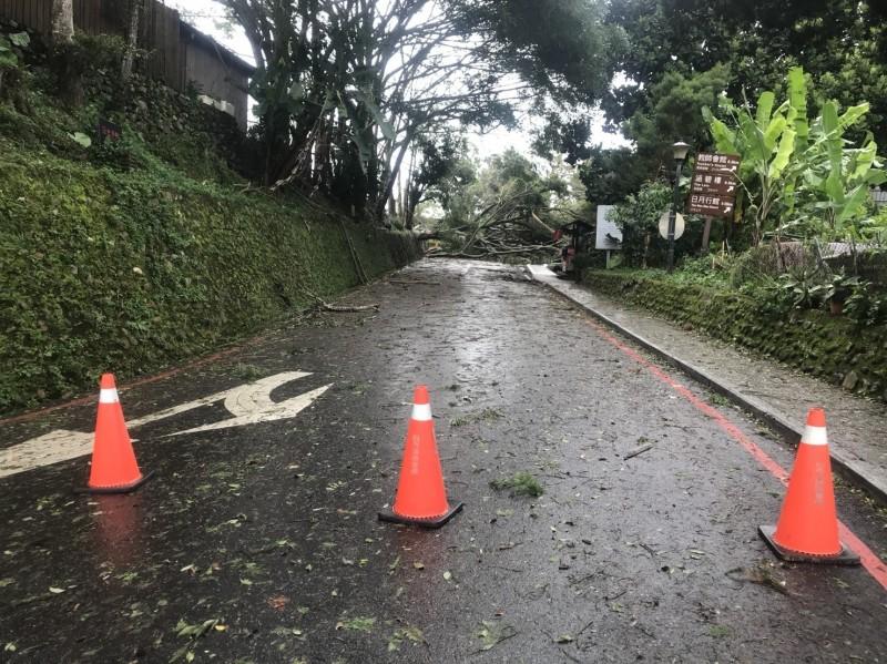 白鹿颱風為南投帶來強勁風勢,日月潭水社鬧區梅荷園路樹倒塌影響通行。(記者劉濱銓翻攝)