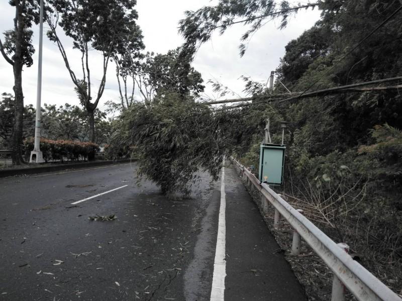 白鹿颱風帶來強勁風勢,省道台16線集集路段也有路旁竹子倒塌,一度佔據路面影響通行。(記者劉濱銓翻攝)