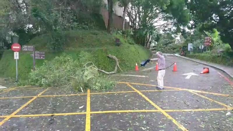白鹿颱風過境,在南投日月潭帶來強風,有民眾巡視樹倒不慎遭樹木壓傷。(記者劉濱銓翻攝)