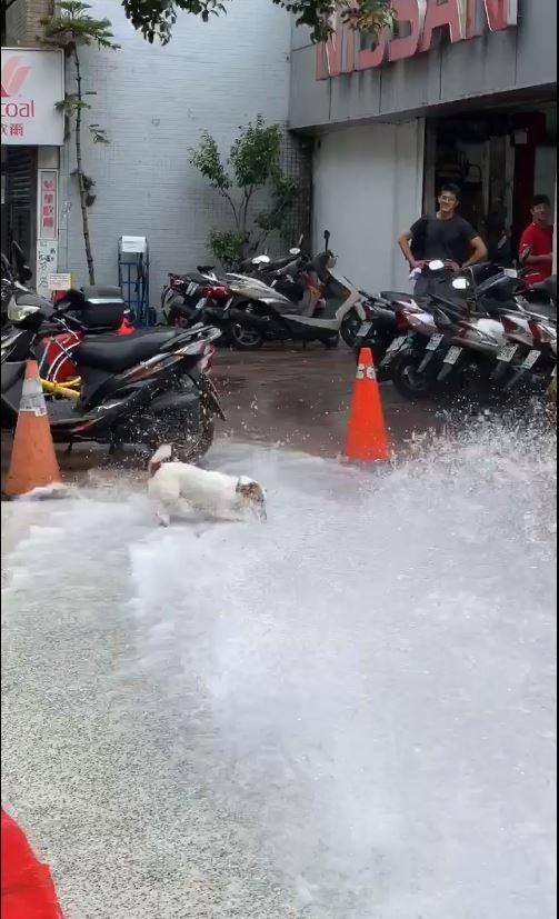 網友拍下戲水的小狗。(圖擷自爆廢公社)