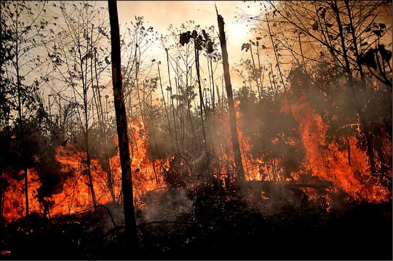 巴西宏東尼亞(Rondonia)州首府維洛港(Porto Velho)境內一大片亞馬遜雨林起火燃燒,伐木工人和農人趁勢清除。 (路透)