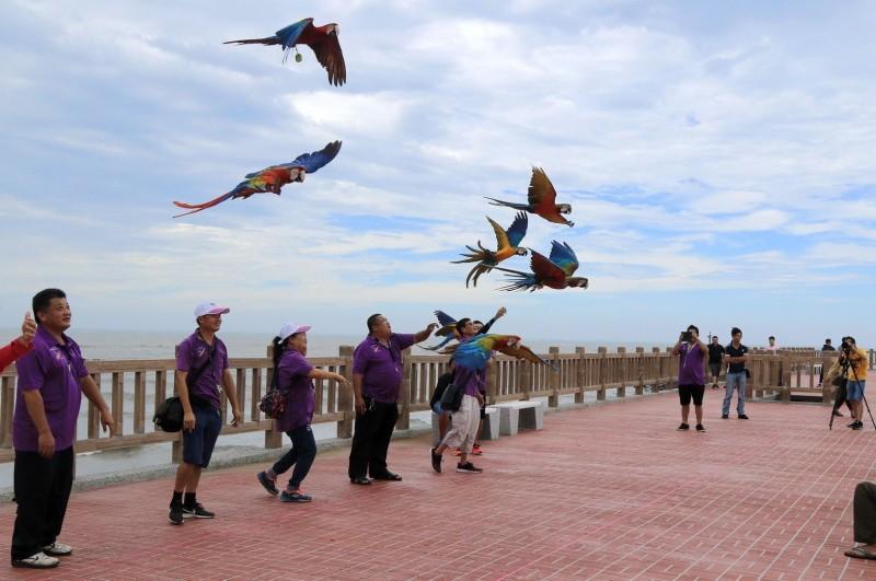 苗栗縣鸚鵡訓練交流協會於颱風天放飛鸚鵡,引發網友砲轟不人道。(記者鄭名翔翻攝)