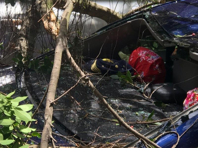 楊慶煌的轎車遭樹木壓壞。(楊慶煌提供)
