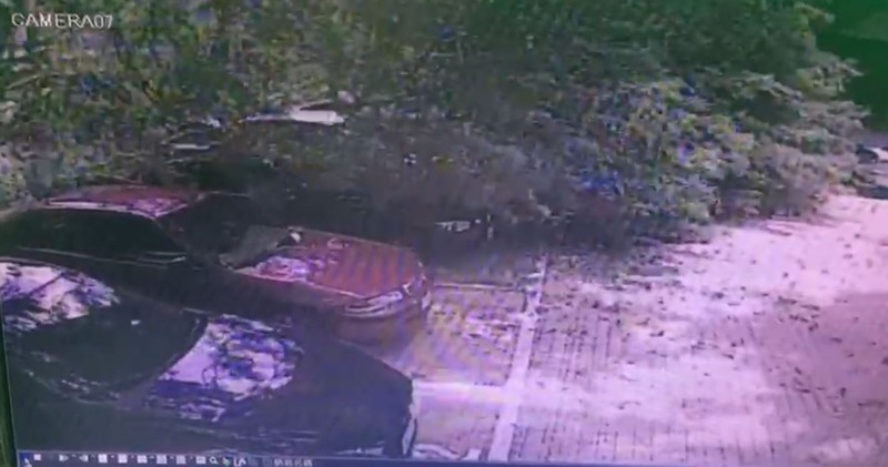 昨天上午,一棵大樹倒下壓到三輛車 。(翻攝自停車場攝影機)