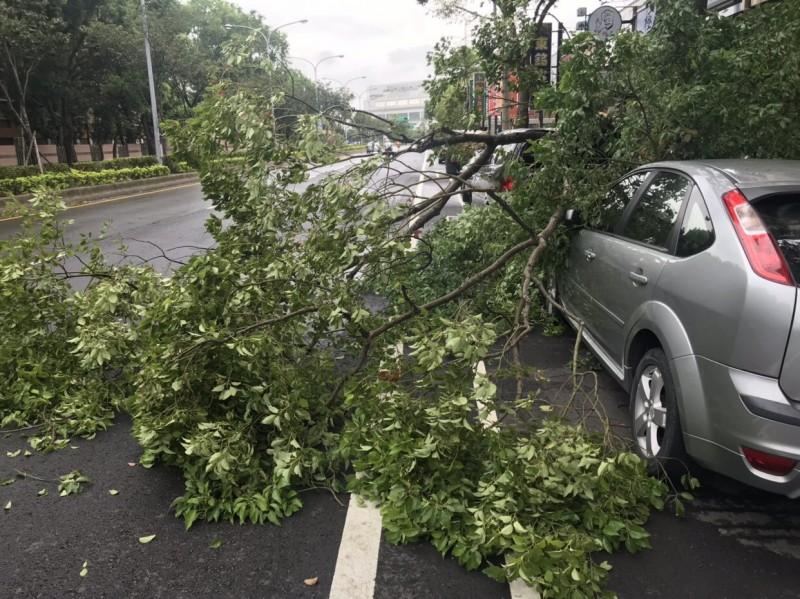 大風一吹路樹連根拔起 壓損路邊2輛轎車