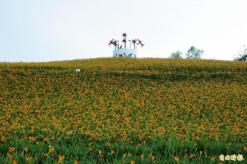 赤科山林家園經過一日颱風肆虐,花朵因為風力不大,都還好好的在枝頭綻放。(記者花孟璟攝)