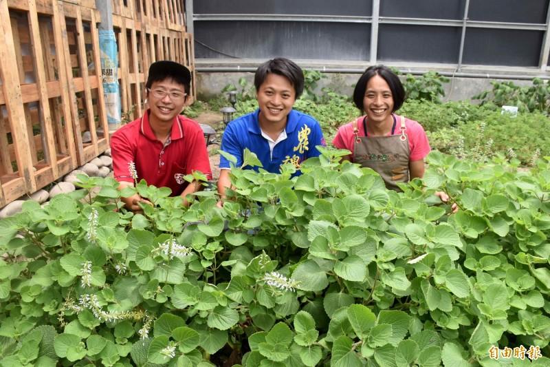 林詹翊(圖由左至右)、林詹崙、林詹梃3兄弟,將海外累積管理經驗,實踐在自家的有機農園。(記者李容萍攝)