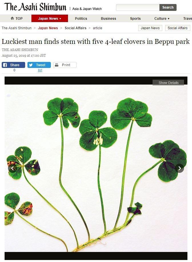 日本一名7旬老翁近日在公園散步時,竟發現5個連莖的「四葉幸運草」。(圖擷取自《朝日新聞》網站)