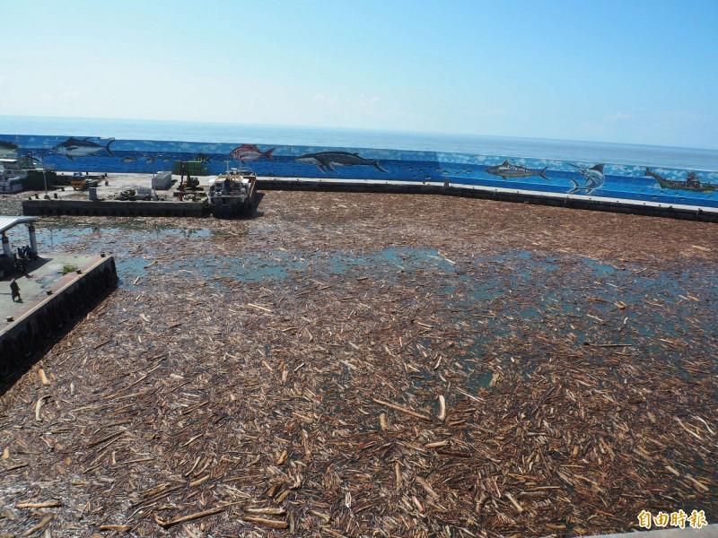 富岡漁港港區被漂流木塞爆了。(記者王秀亭攝)