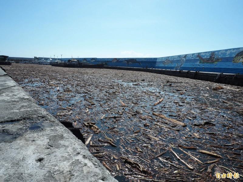 富岡漁港一夜之間湧入大批漂流木,今天上午部分漂流木隨著海流,被帶往海上。(記者王秀亭攝)