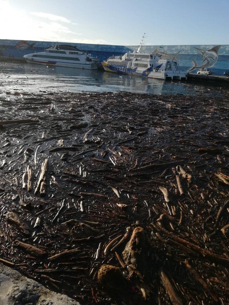 再經ㄧ夜,漂岀富岡港的漂流木又漂進港區。(記者王秀亭翻攝)