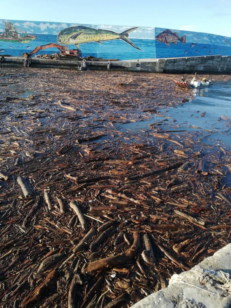 再漂進富岡港的漂流木影響主要航道。(記者王秀亭翻攝)