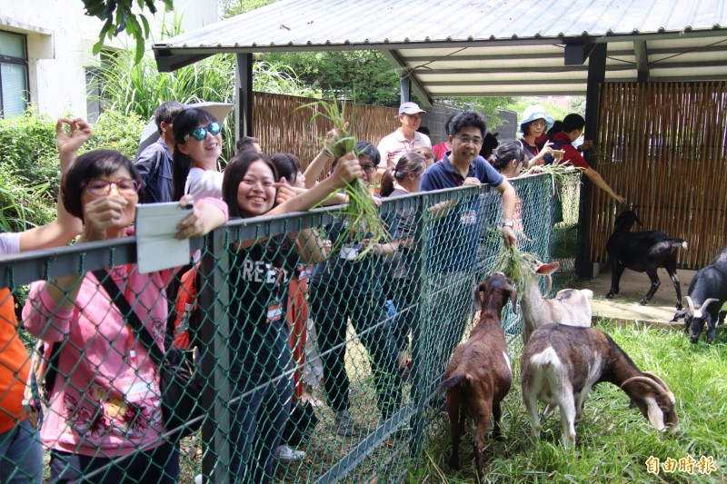 台北市五常國中教職員和家長志工們今天到國立關西高中從餵山羊。(記者黃美珠攝)