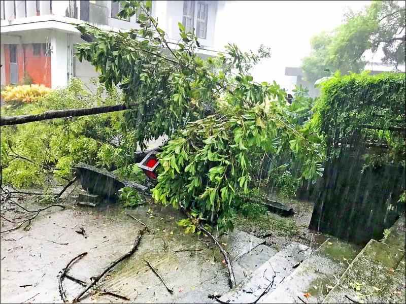花蓮縣定古蹟新城神社舊址,受白鹿颱風影響,佇立在參道旁的逾八十年石燈籠遭傾倒樹壓垮。(花蓮縣文化局提供)