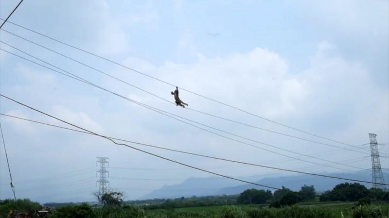 大膽的台灣獼猴走在半空中的電纜上。(楊傳峰提供)