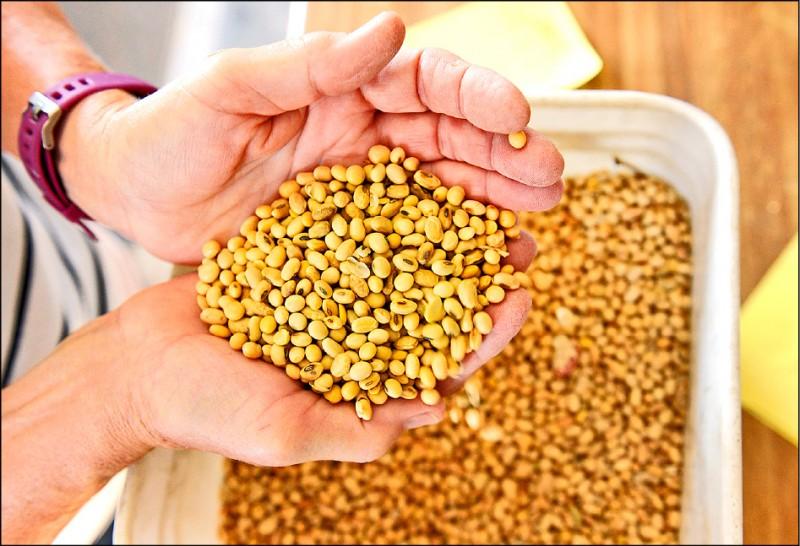 美國北達科他州(North Dakota)科爾法克斯(Colfax)附近一座農場收成的大豆。(路透)