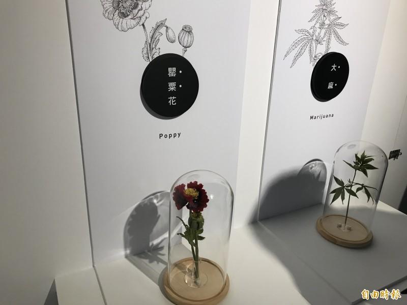 現場也展示大麻、罌粟花等植物的外觀。(記者蔡思培攝)