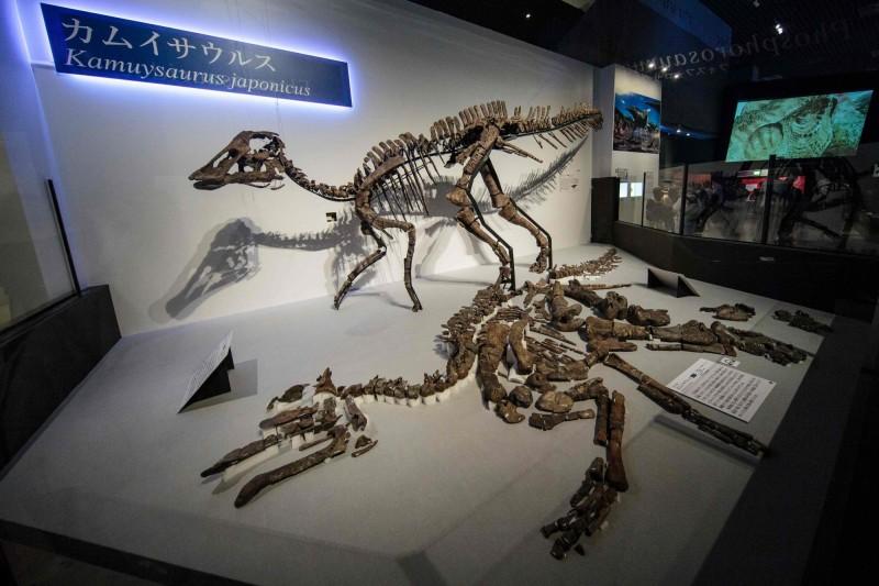 日本2019年恐龍博覽會上,展覽新恐龍物種「神威龍」的化石複製品。(法新社)