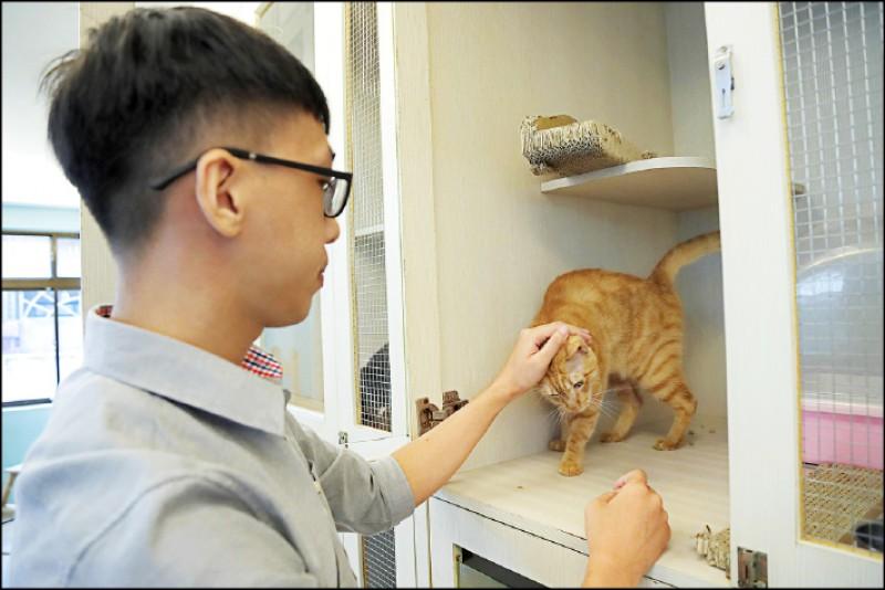 待在籠舍中的中途貓多半較不親人或是害羞怕生,雖然不能出來與學員玩耍,但「放飯時間」仍可看到中途之家志工們與牠們互動的溫馨畫面。(記者陳宇睿/攝影)