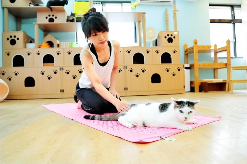 在貓咪無處不在的空間裡做瑜伽,跟身旁的貓貓一起伸展四肢,不只舒緩了緊繃的肌肉,也讓心靈被療癒了!(記者陳宇睿/攝影)