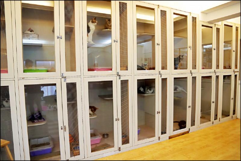 把瑜伽課搬到中途之家,讓學員與超過40隻中途貓一起近距離互動,一旁籠舍中還有貓咪「監督」上課。(記者陳宇睿/攝影)