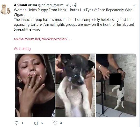 新加坡網路上近日流傳一段虐狗影片。(翻攝AnimalForum推特)☆自由電子報關心您,吸菸有害健康☆