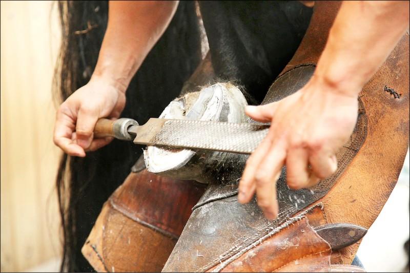 在釘上新蹄前,要先修整馬蹄,使用銼刀等工具進行。(記者沈昱嘉/攝影)