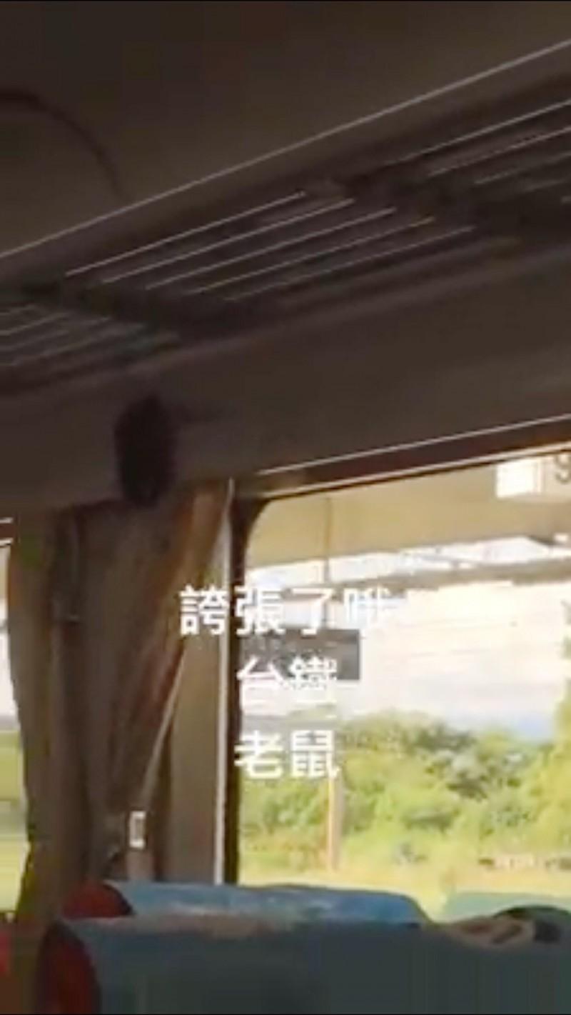 有網友在臉書社團「爆料公社」上爆料,昨日搭乘台鐵時,錄下一隻體型龐大的老鼠在窗簾上方橫行亂爬,網友大喊「好噁心」。(圖擷取自臉書「爆料公社」)