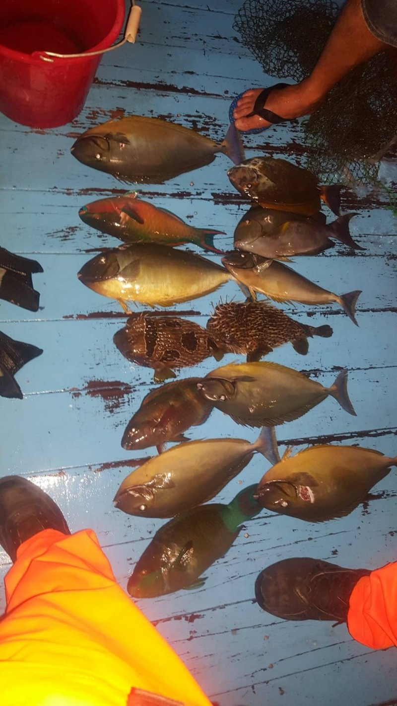 墾丁膠筏暗夜打珊瑚礁魚遭逮。(記者蔡宗憲翻攝)