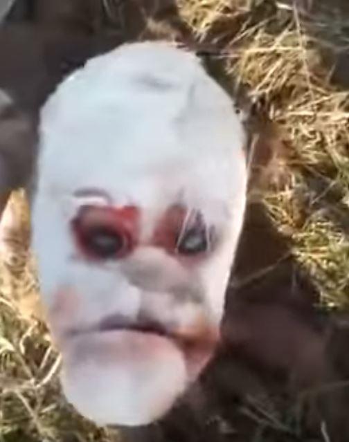 阿根廷日前誕生的「人臉牛」震驚當地居民。(圖擷自AFG Social Media YouTube)