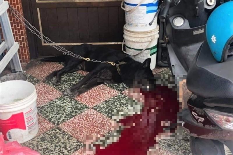 小狗被槍殺後血流滿地。(圖:屏東小鎮資訊提供)
