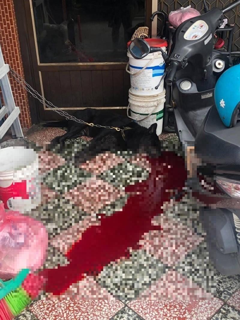 屏東3天驚傳2起家犬遭槍擊頭部施虐案件,台灣動物緊急救援小組呼籲警方緝兇,將殘忍虐狗兇手繩之以法。(台灣動物緊急救援小組提供)