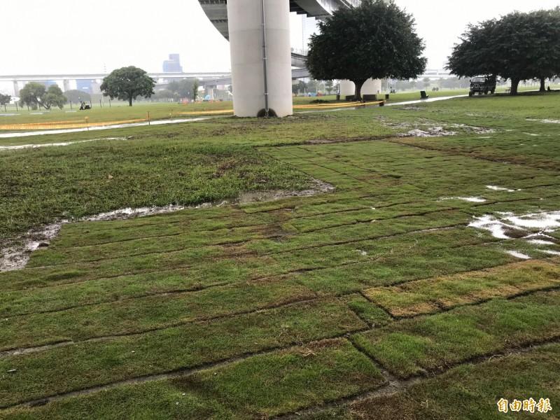 國民黨新北市黨部副主委蔡博文認為是溝通誤會,強調約定好要補植的辰光橋下,已經補植完成。(記者陳心瑜攝)
