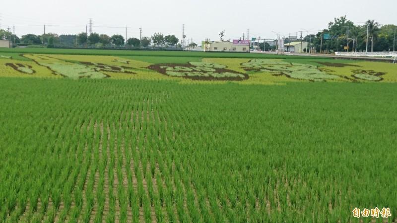 六甲彩繪稻田 主角「ㄇㄚˊ幾兔」現形了