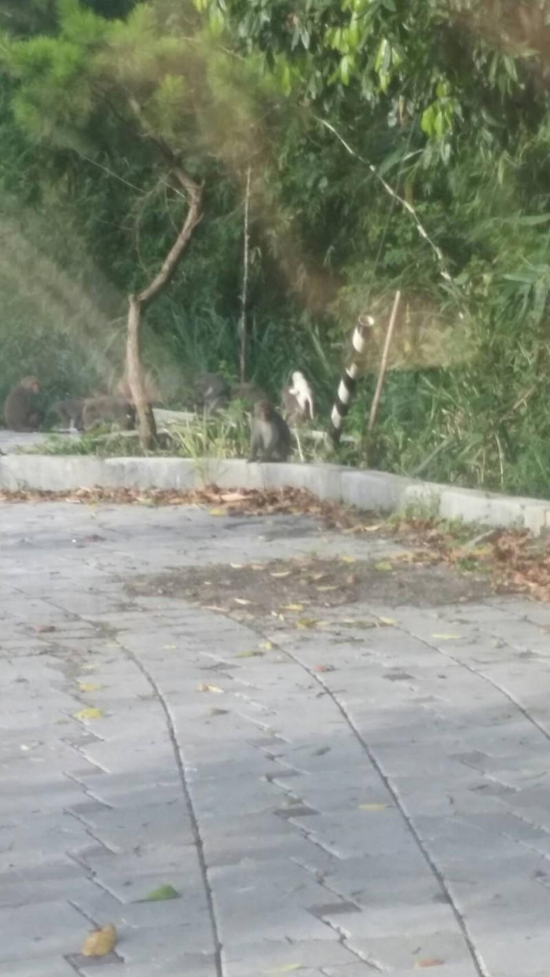 雲林又有小白猴 雲林生態園區見稀客