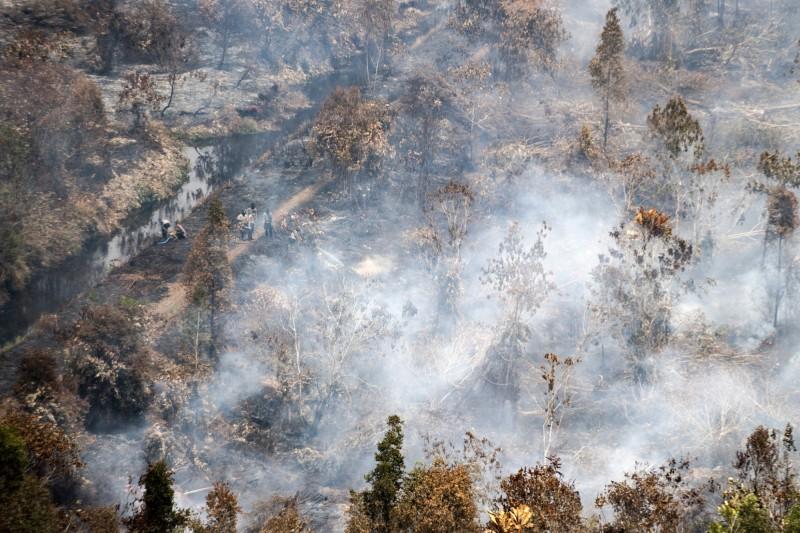 印尼的蘇門答臘(Sumatra)嚴重山火,將森林燒成一片焦林。(美聯)