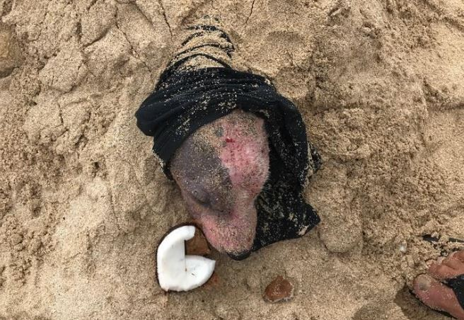 美國夏威夷(Hawaii)動物援助組織PAWS最近在歐胡(Oahu)海灘上,發現一隻被「活埋」的小狗。(圖擷取自PAWS of Hawaii臉書)