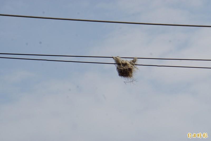 鳥巢在風吹雨打下超過半年仍不會掉。(記者詹士弘攝)