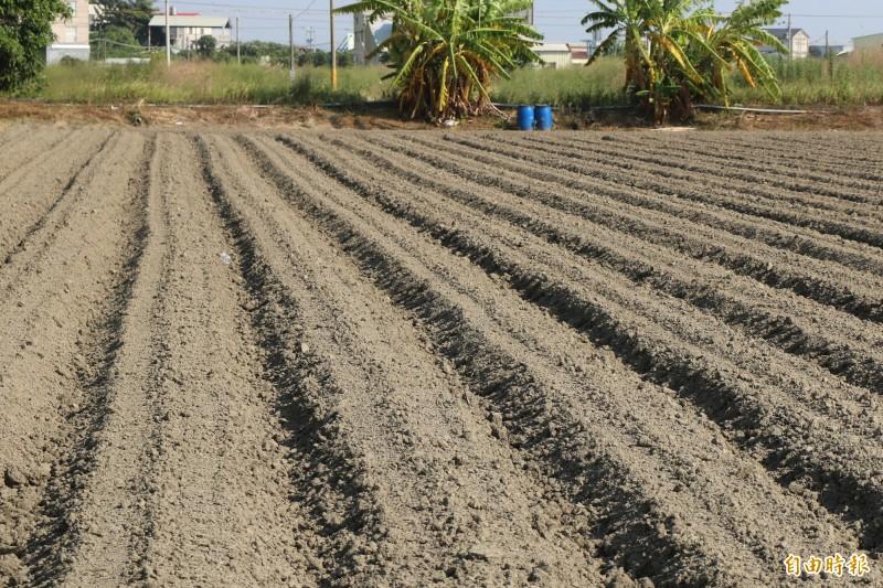 台南安定胡麻因日前連日下雨,打亂農民種植時機,近期天氣放晴,農民趕緊整地播種,希望能有好收成。(記者萬于甄攝)