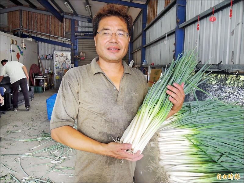 三星蔥每公斤平均拍賣價飆到兩百八十四元,較七月初翻漲七倍,締造今年新高紀錄,蔥農張浩增笑逐顏開。(記者江志雄攝)