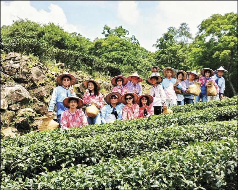 臺灣藍鵲茶透過企業契作,成功讓越來越多茶農願意投入友善耕作的行列。(圖片提供/藍雀茶)