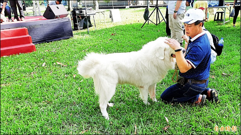 卑南鄉長許文獻牽來一隻大白熊犬,並承諾將建寵物殯葬園區。(記者黃明堂攝)