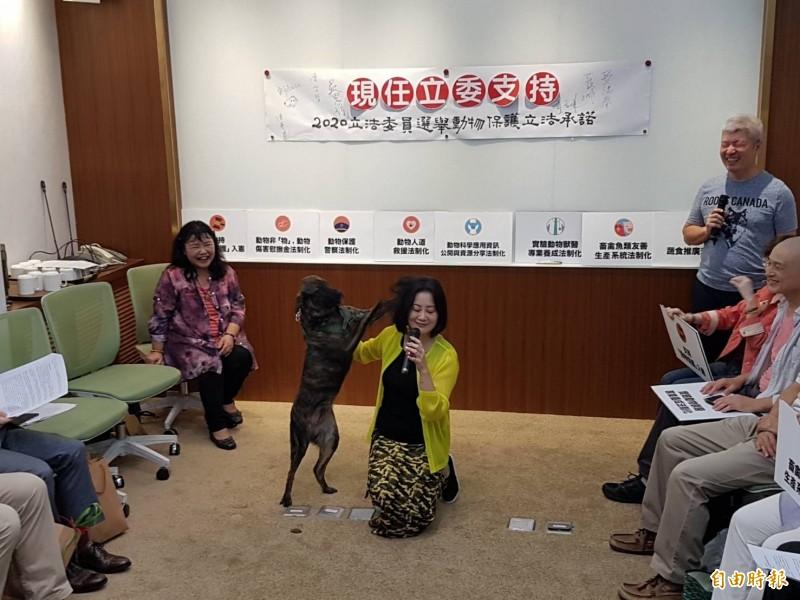 民進黨立委吳思瑤帶著她的狗寶貝「Zaza」現身。(記者謝君臨攝)