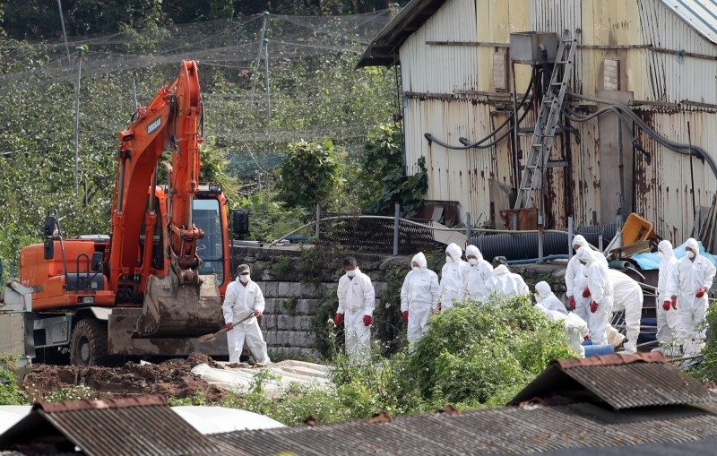 非洲豬瘟蔓延,目前南韓撲殺生豬將破10萬頭,佔全國產量1%。(歐新社)