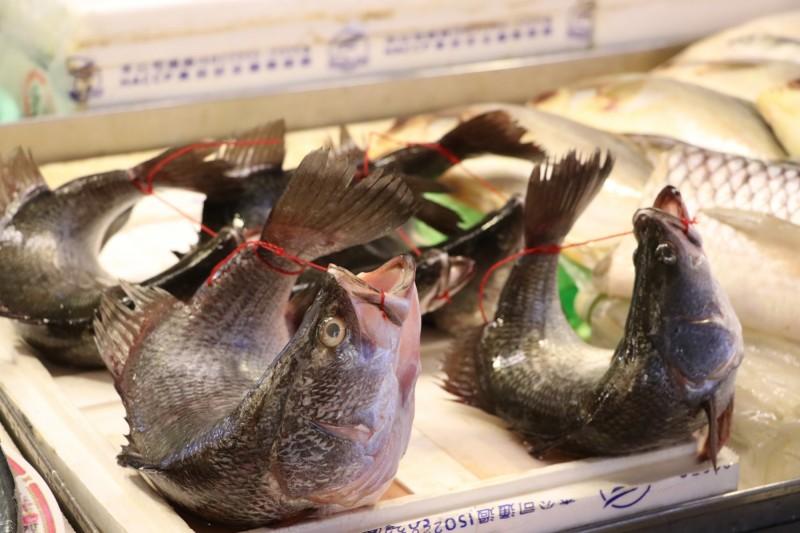 動保團體指出,「活體弓魚」會使肉質變差,更有食安疑慮。(圖由台灣動物社會研究會提供)