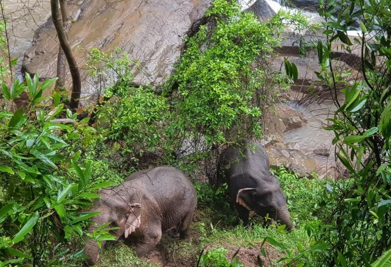 懸崖邊只剩下2頭大象存活。(歐新社)