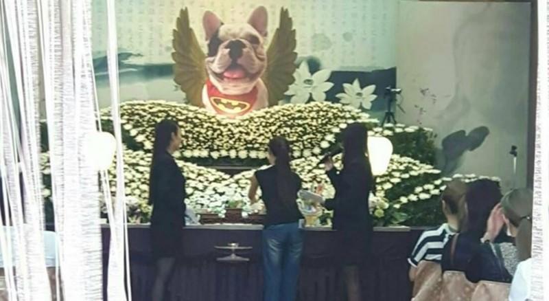 民眾發現有飼主替愛犬辦告別式,探聽價格發現高達18萬元,網友們認為飼主相當有愛,將愛犬視為一家人。(圖擷取自爆廢公社)