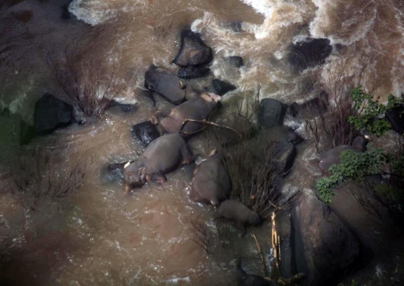 考艾國家公園工作人員上週六「地獄崖瀑布」(Haew Narok)附近發現6頭死象。(歐新社)