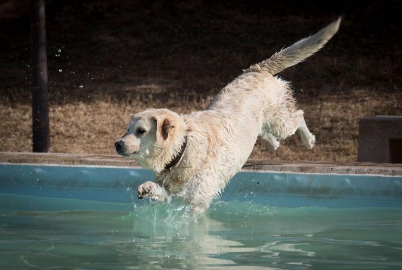 國際研究發現,養狗狗竟可讓飼主死亡率減少24%。(法新社)