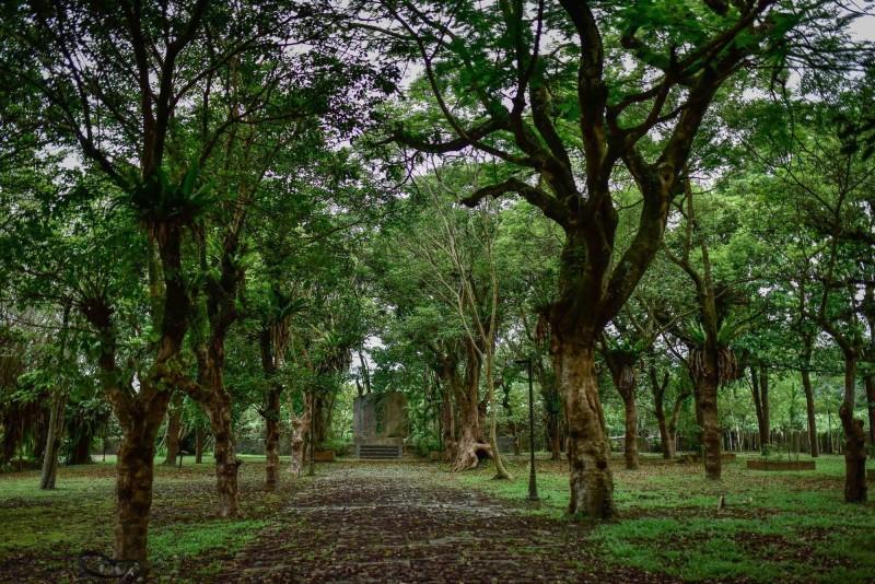 老樹成蔭成為花蓮「怡園生態小學塾」一大特色。(花蓮縣環保局提供)